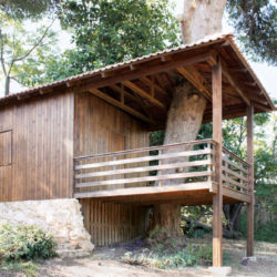 Two Tree House_1